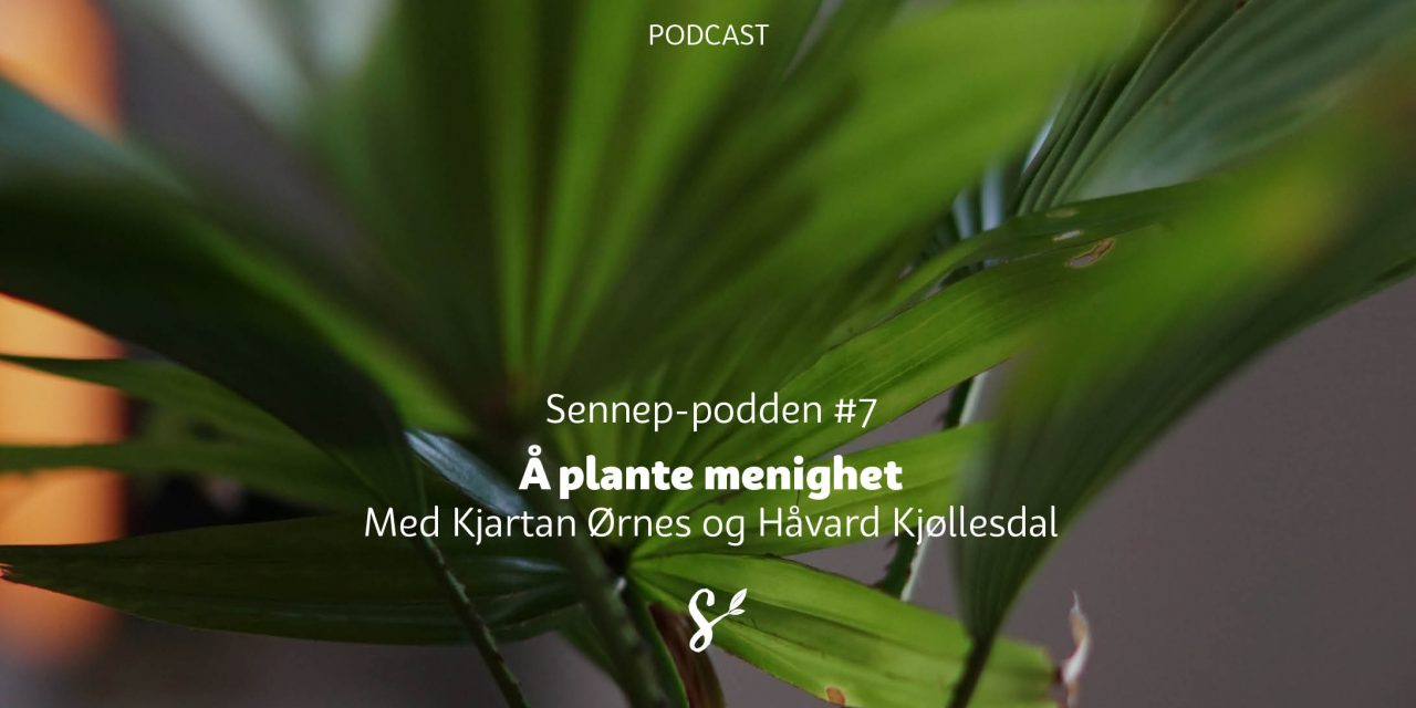 Sennep-podden #7 | Å plante menighet | Med Kjartan Ørnes og Håvard Kjøllesdal
